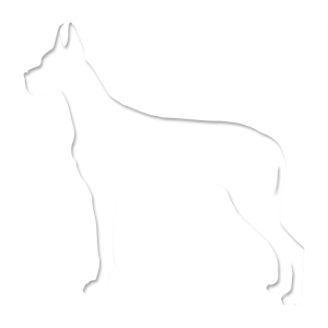 Great Daane Graphics Dog